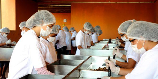Agropecuária foi um dos setores com boa desenvoltura na geração de novas vagas