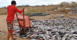 Incidente gerou a morte de 60 toneladas de peixe Foto: upanema.net)