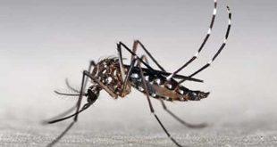 Relação do zika vírus com casos de microcefalia acenderam alerta contra o mosquito