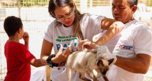 Meta é vacinar 80% dos cães e gatos do municípios