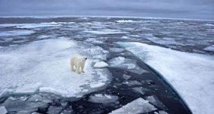 Aquecimento do planeta causa maior degelo e ameaça espécies animais e vegetais (Foto: Getty Images).