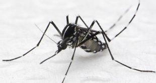 Uso de técnicas nucleares para o controle de mosquitos será discutido em Brasília este mês.