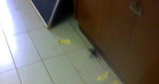 Na manhã desta sexta-feira,  atendimentos foram suspensos porque aranha caranguejeira invadiu a sala onde estavam as crianças (Foto: cedida)