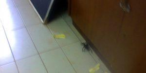 No começo de março, atendimento foi suspenso devido ao aparecimento de aranha na sala.