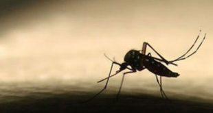 Estado notificou 81 mortes em decorrência de dengue em 2016.