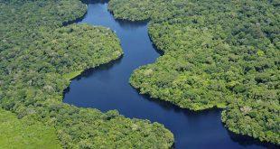O Brasil tem avançado na redução do desmatamento da Amazônia e do Cerrado, mas precisa fortalecer a proteção da Mata Atlântica e combater ameaças (Foto:  Flickr/CIAT/ Neil Palmer).