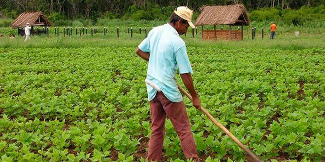 Com atuação consolidada no agronegócio, banco projeta aplicar R$ 10 bilhões