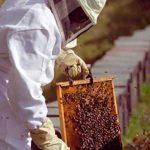 EMPARN firma parceria técnica para fortalecimento da apicultura no RN