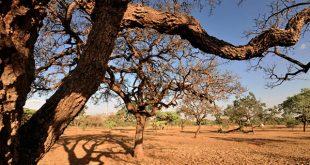 FAO vai estimular o desenvolvimento da agricultura familiar e combater a fome e os efeitos da seca na região (Foto: ONU Brasil).