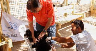 Em Mossoró, a meta é vacinar 80% do público-alvo, formado por 28.990 cães e 12.690 gatos (Foto: Divulgação PMM).