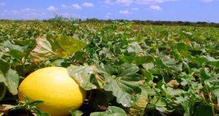 Segmento da agricultura ajudou a obter balanço positivo após nove meses de saldo negativo