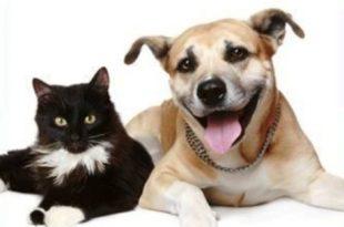 Projeto garantirá castração e identificação de animais de rua
