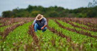 Recomendação aponta que dados de agricultores deixam de ser solicitados e isso facilita as fraudes e dificulta as investigações