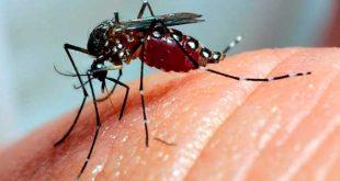 Ao todo, foram confirmados no país 148 casos de dengue grave e 1.736 casos da doença com sinais de alarme.