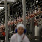 Chile, China e Egito anunciam retomada da importação de carne brasileira