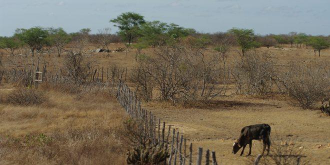 Benefício é concedido a agricultores cadastrados no Garantia Safra e que tenham sofrido perdas com a estiagem. Foto: Eduardo Aigner/MDA