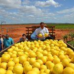 RN proíbe entrada de quatro alimentos em 13 municípios devido a mosca da fruta