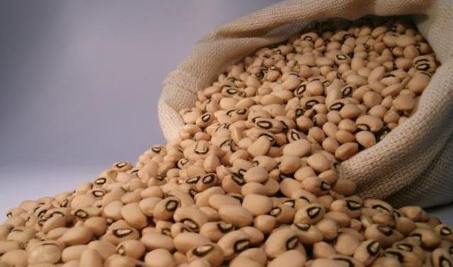 Feijão é principal produto da sagra de grãos potiguar