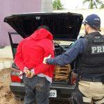 Motorista foge da fiscalização e é preso com pássaros silvestres no RN