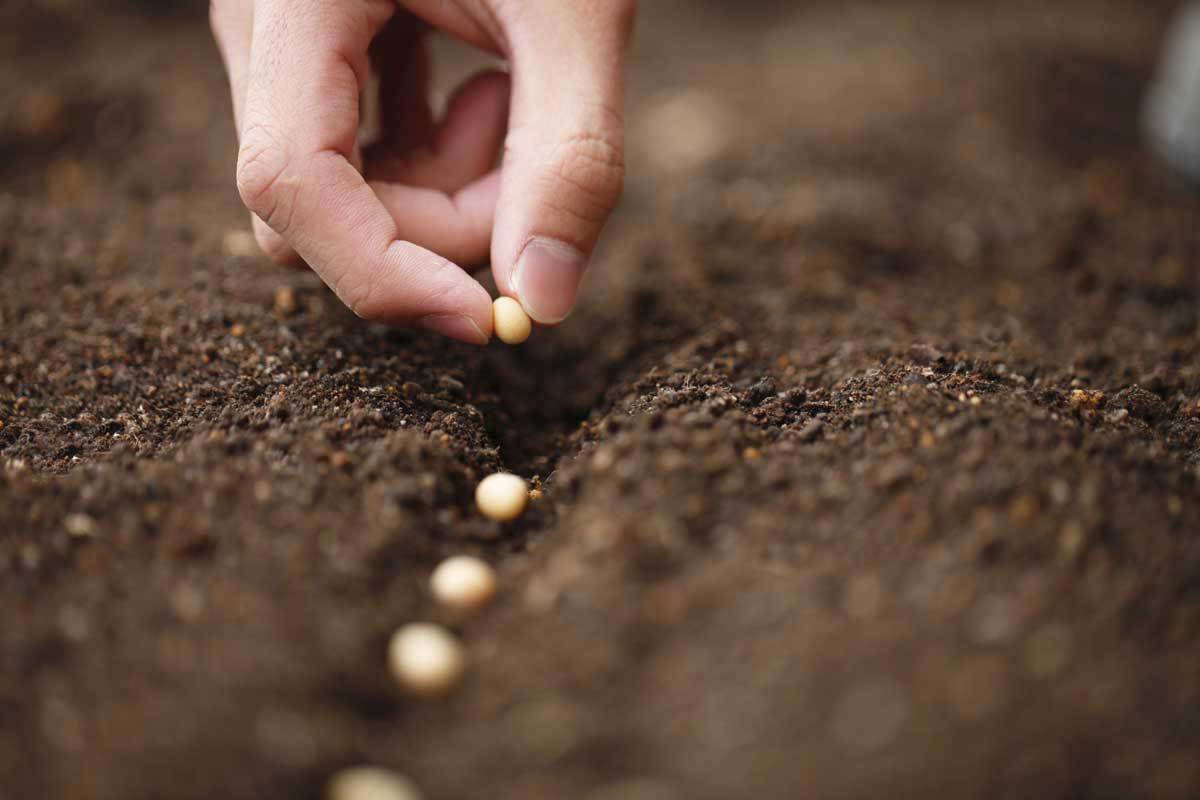 Semeadura livre, colheita obrigatória - Francinaldo Rafael