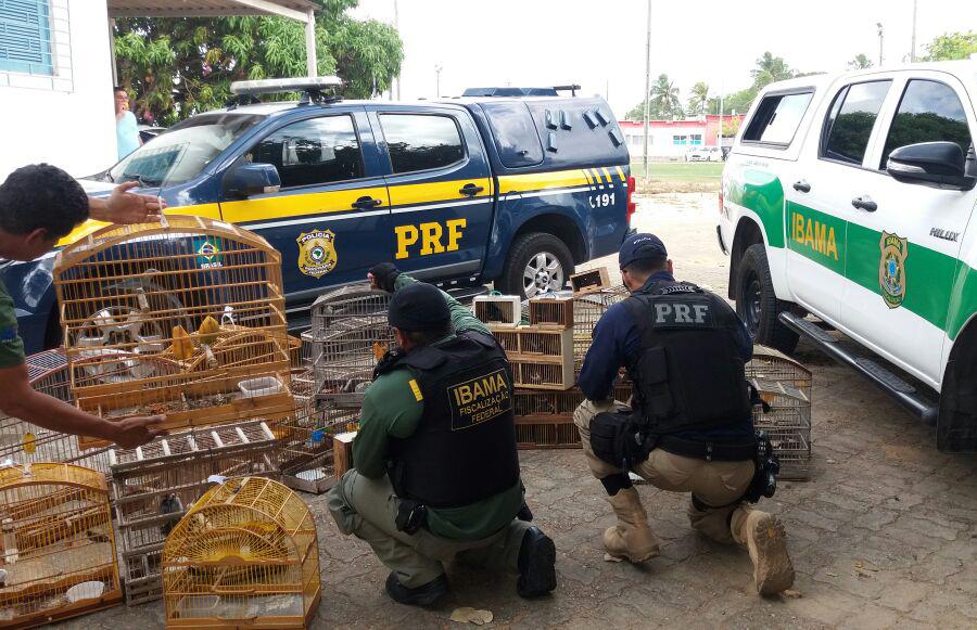Foram apreendidos 95 pássaros silvestres de várias espécies e aplicado um total de aproximadamente R$ 30 mil em multas.
