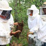 Ufersa oferece curso de criação de abelhas para iniciantes