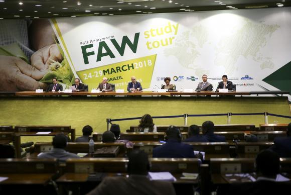 Brasil ajuda países africanos a combater lagarta que ataca milho, algodão e soja