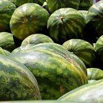 Exportações de frutas do RN para a Rússia aumentam em 2018