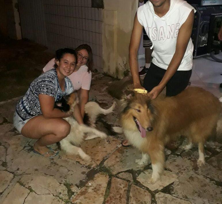 Os animais foram encontrados por uma moradora do bairro Abolição 2, nesta quinta-feira (12) e avisou a ADE que os animais foram vistos naquelas proximidades.