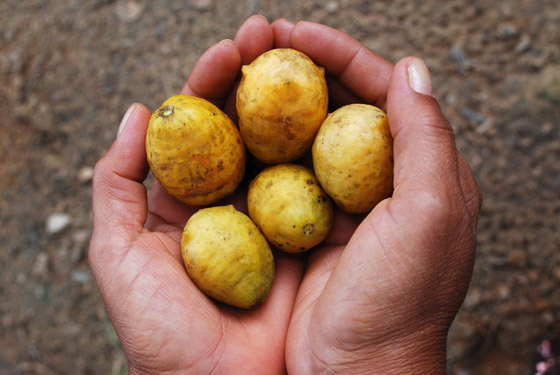 O potencial subaproveitado das frutas do Vale do Açu – Joacir Rufino
