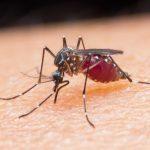 Roraima confirma 5.750 casos de malária no primeiro trimestre