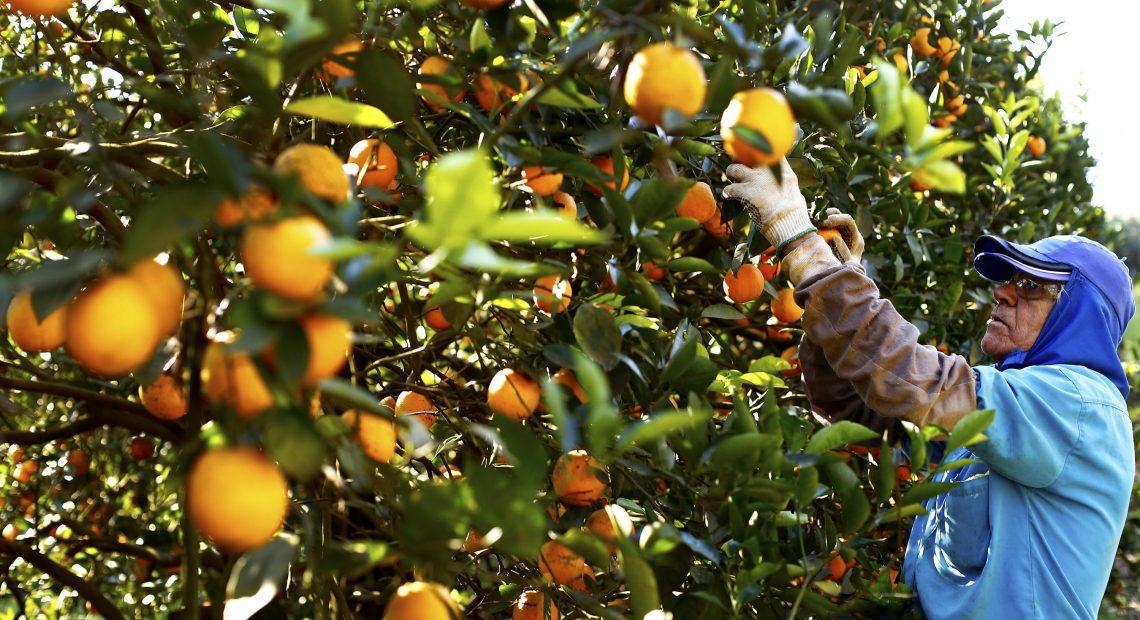 Segundo a organização, atualmente, um em cada quatro copos de suco de laranja consumidos no mundo vem do Brasil.