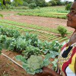 Redes de supermercados contribuem para pobreza no campo, diz estudo