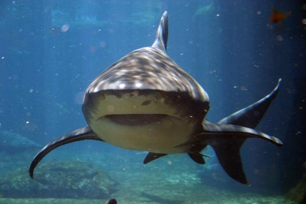 Morre rapaz atacado por tubarão em praia do Grande Recife