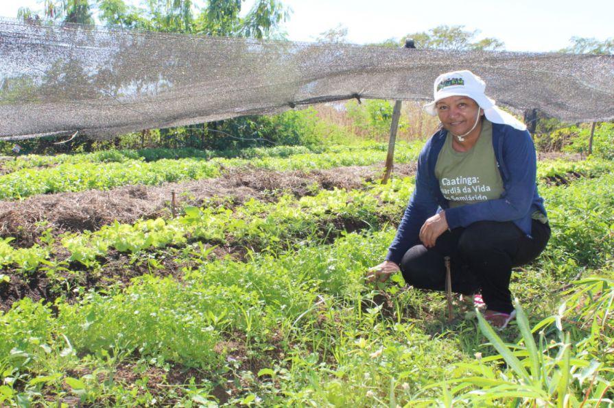 Agricultoras de Caraúbas são exemplo de superação e sucesso na Agroecologia