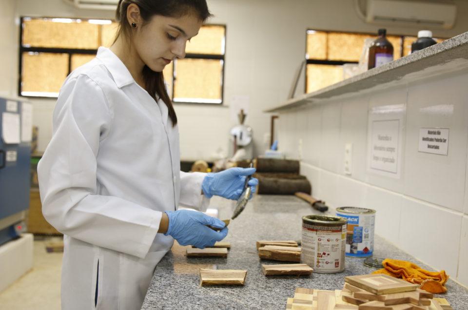 Pesquisadores da Ufersa estudam formas de preservar madeiras da Caatinga