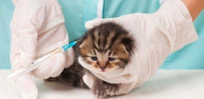 Mossoró vacina cães e gatos contra a raiva, neste sábado (29)