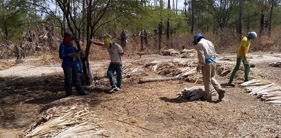 Operação resgata 25 trabalhadores em situação análoga à escravidão no RN