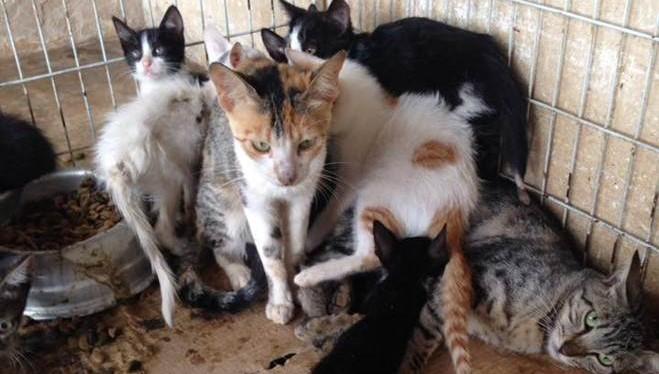 TO_Guarai_estudante_denuncia_maus_tratos_animais_ccz_1