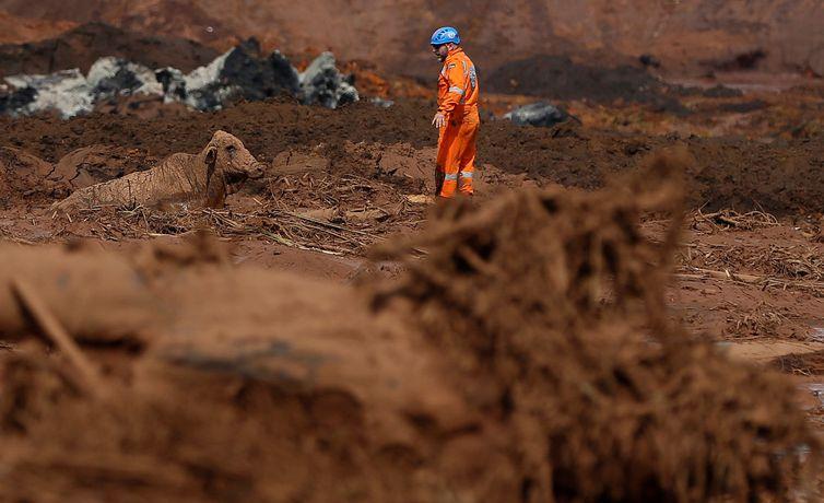 Ibama cobrará da Vale multa diária de R$ 100 mil até que o plano de salvamento de animais seja executado satisfatoriamente - Adriano Machado/Reuters/Direitos Reservados