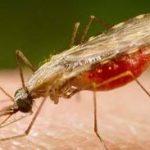 Casos de malária no Brasil têm queda de 38%