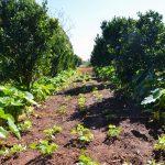 FAO e países lusófonos querem impulsionar agricultura familiar
