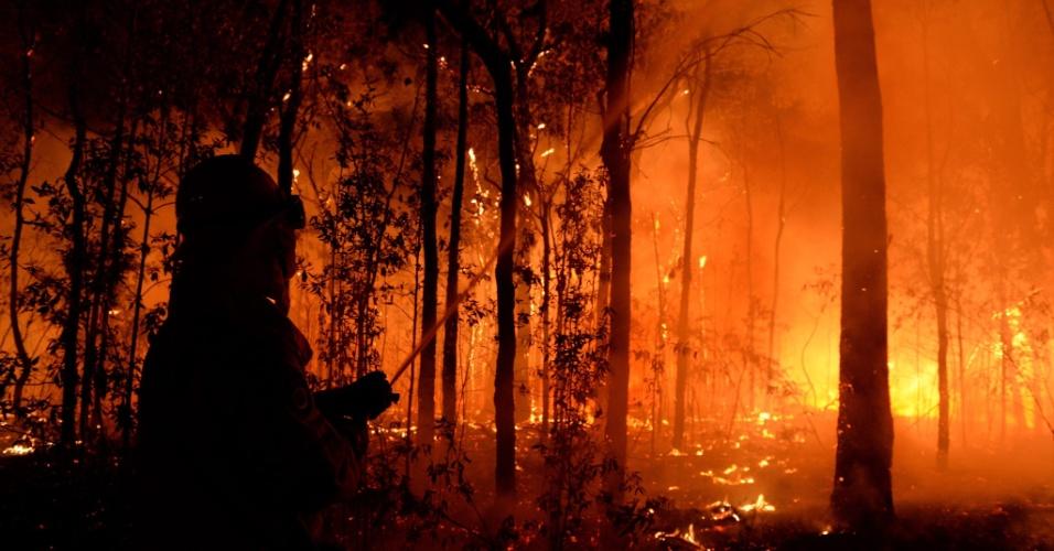 Incêndios florestais destroem 100 mil hectares no leste da Austrália