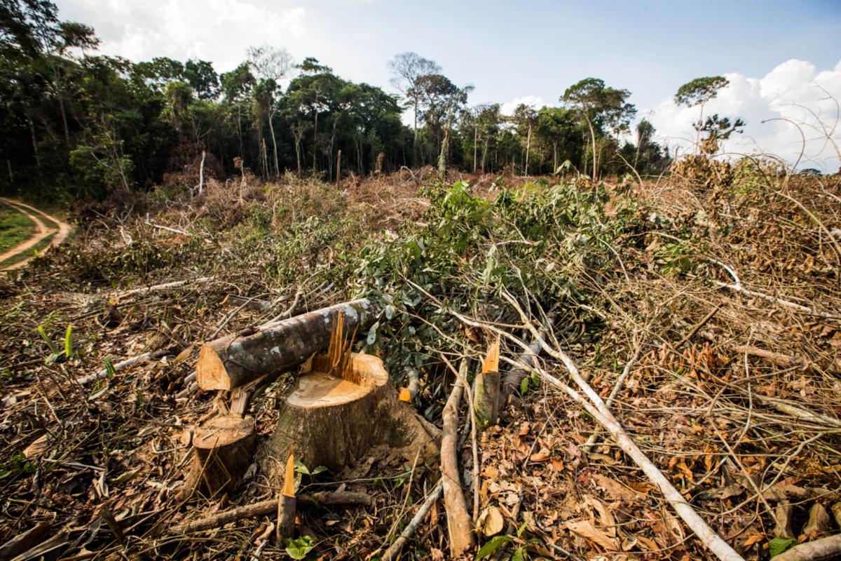 Desmagtamento na Amazónia sobe 85% em 2019