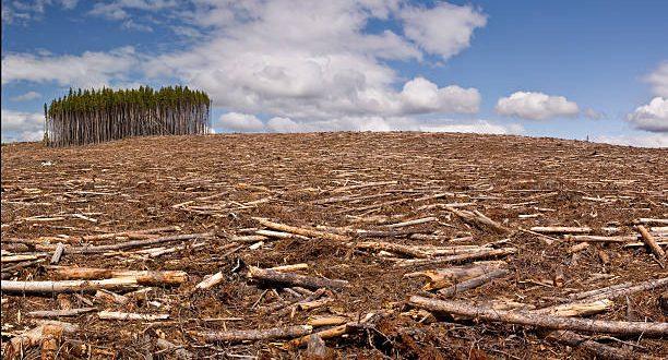 Área desmatada no Brasil em 2019 equivale a oito cidades de São Paulo